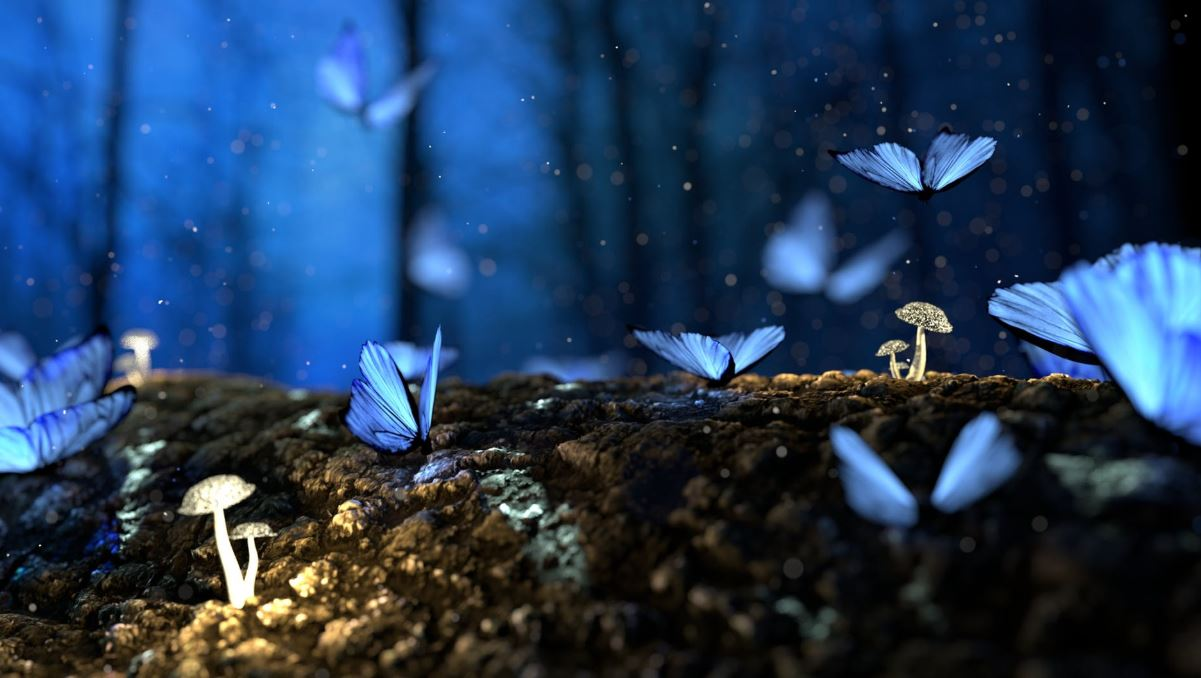 blue butterfly and mushrooms